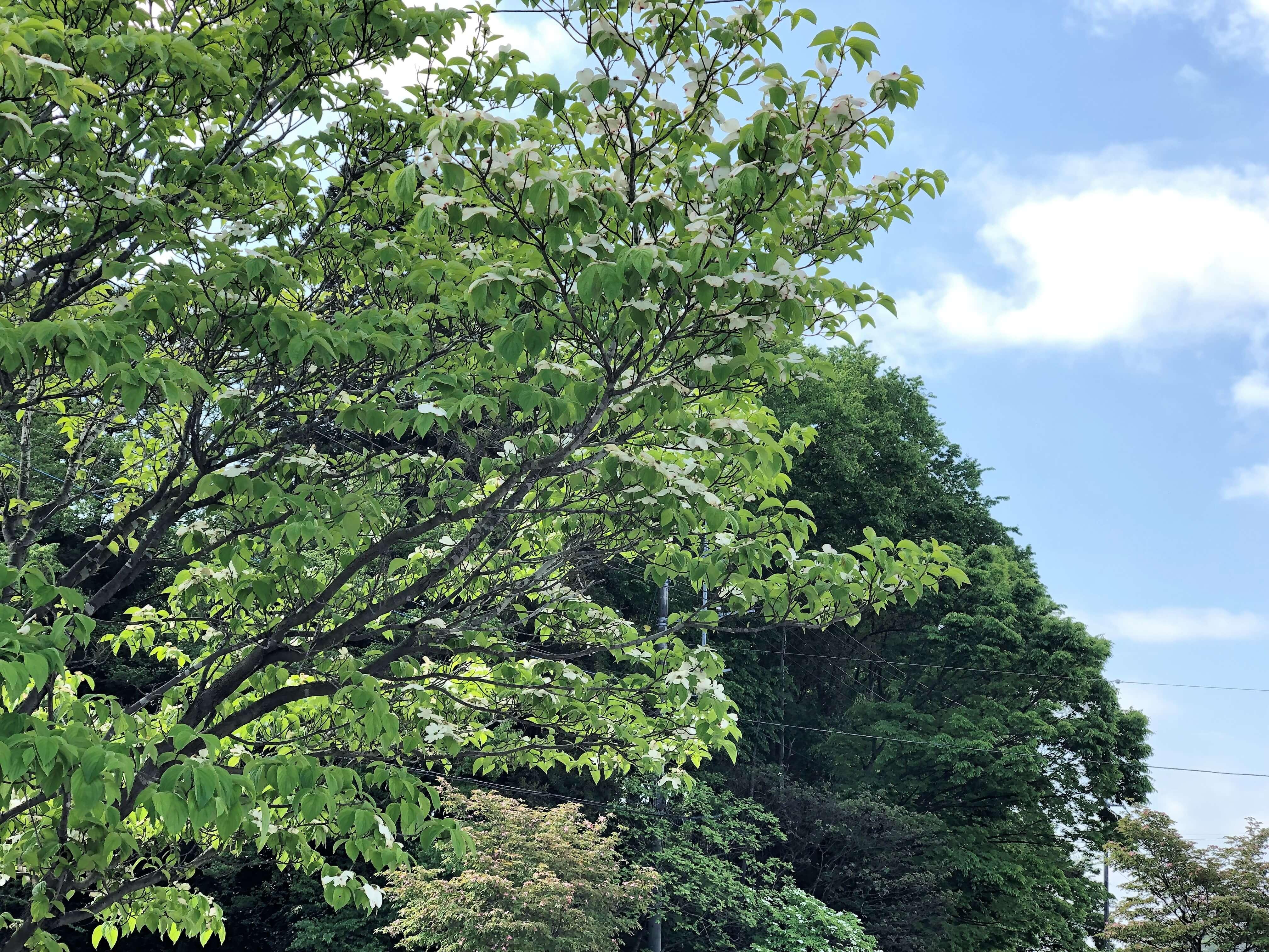 筑波サーキットライセンス 葉桜